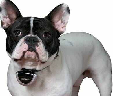 Dog Camera Collar
