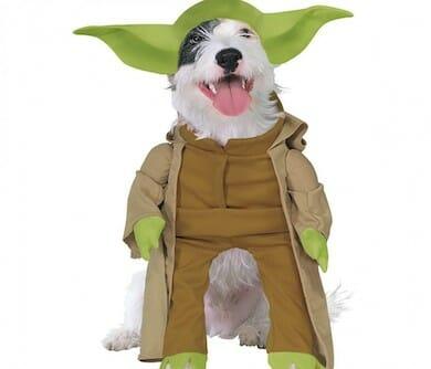 Dog Yoda Costume