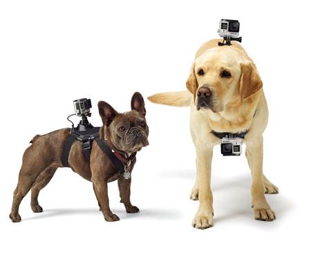 dog-camera-mount