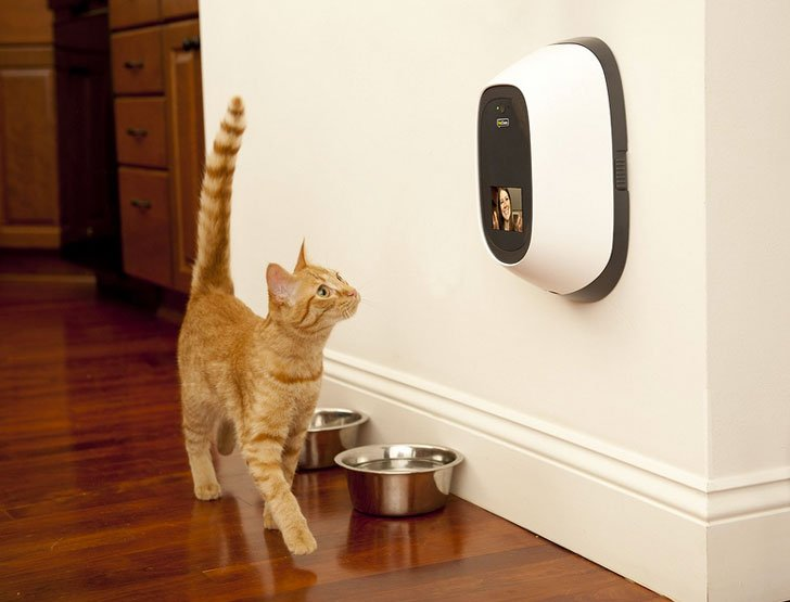 Pet Surveillance Camera