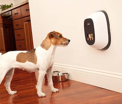 Pet Surveillance Camera - cool pet products