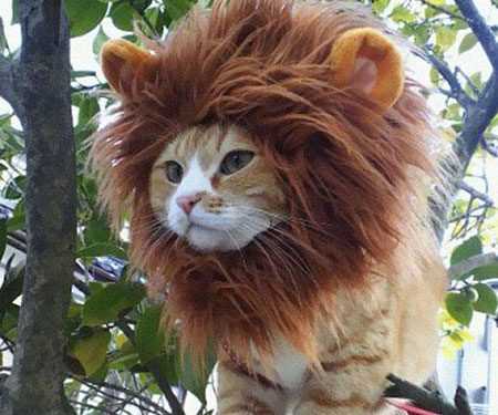 lion pet cat hat