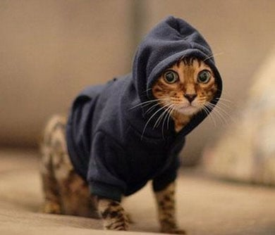pet hoodies - cat