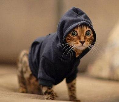 pet hoodies - cat