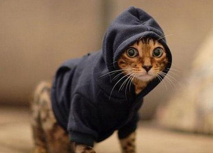 pet hoodies