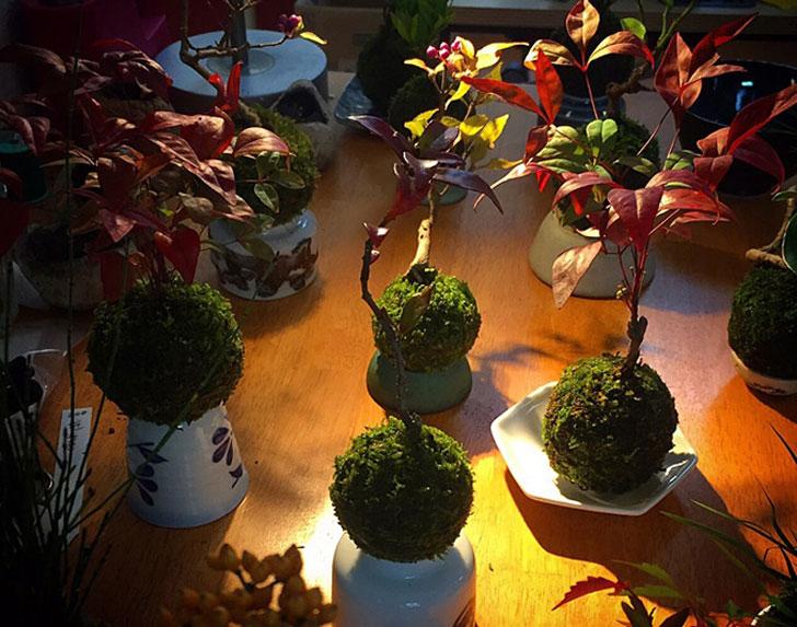 Floating-Bonsai-Trees