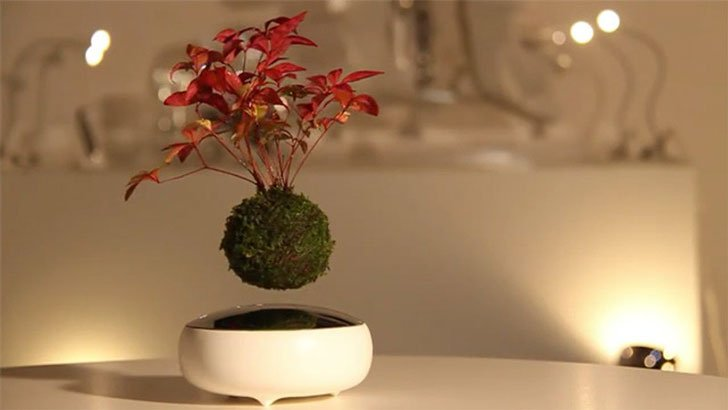 floating-bonsai trees