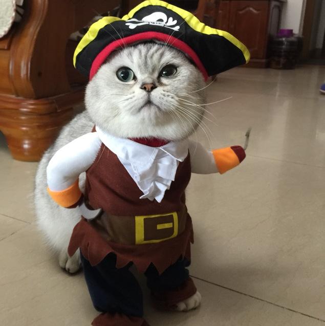 Funniest Cat Picture Contest
