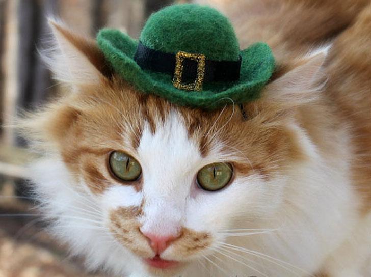 Cat-Hats4