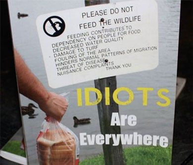 Idiots Are Everywhere