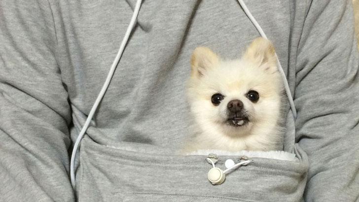 The-Pet-Pocket-Hoodie5