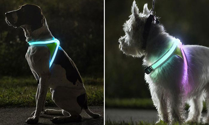 Best Light Up Dog Leash