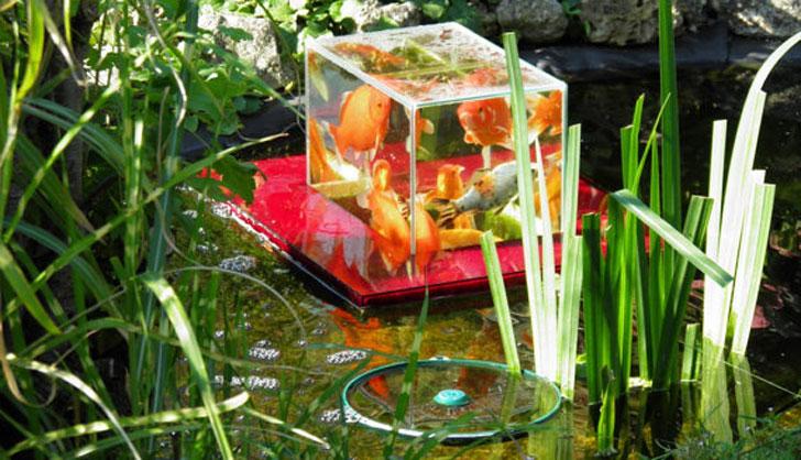 Floating-Fish-Pond-Observatory-1