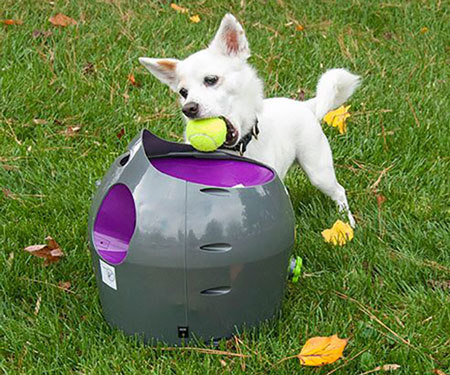 automatic ball launcher - petsafe