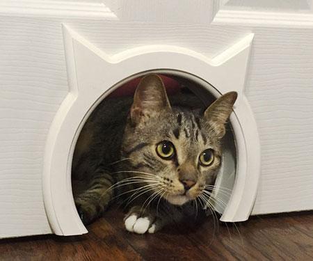 Kitty Pass Interior Cat Door