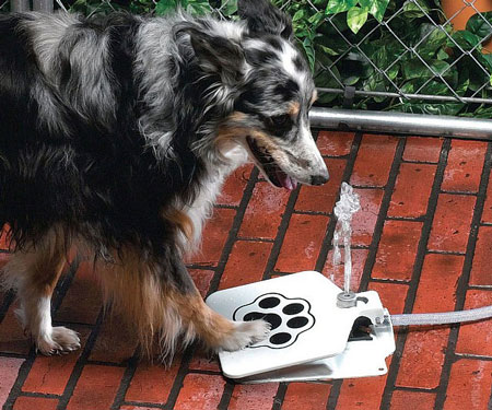 Doggie Pedal Water Fountain