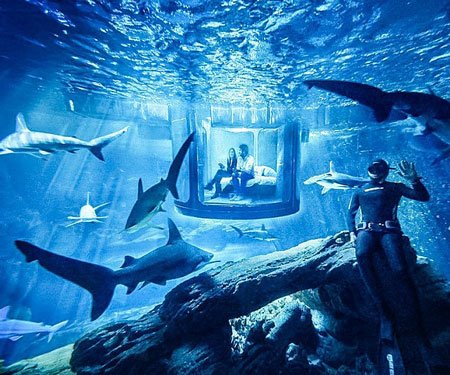 Under Water Shark Room Experience