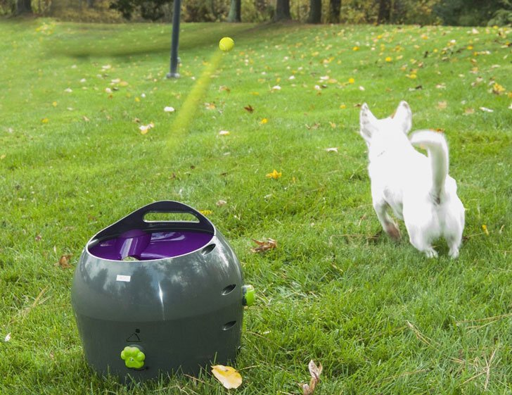 coolest dog gadgets - automatic ball launcher