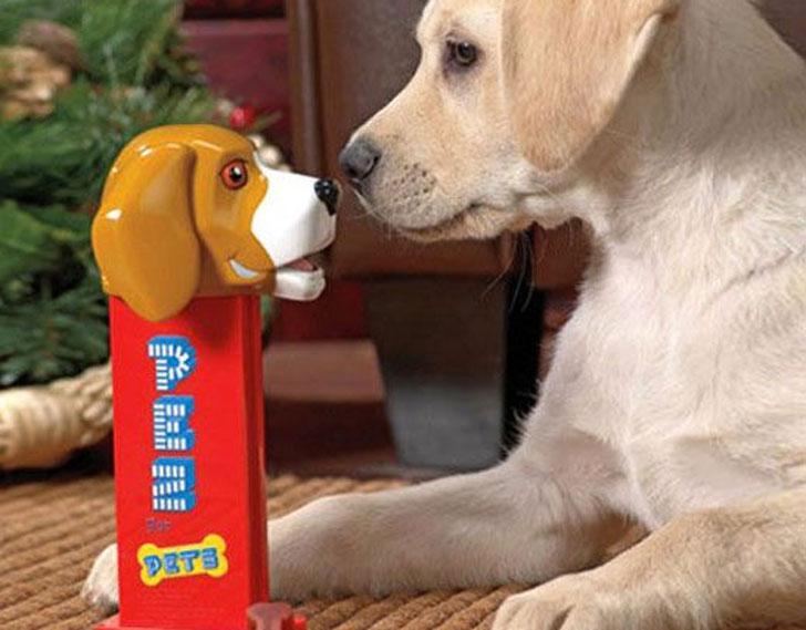 coolest dog gadgets - dog pez despenser