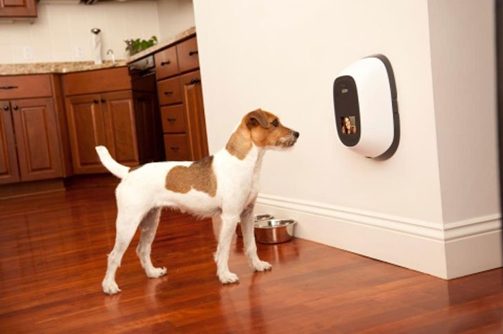 coolest dog gadgets - dog surveilance camera