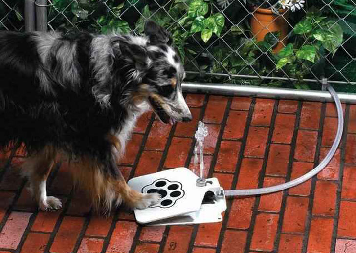 Image result for dog drinking water in backyard