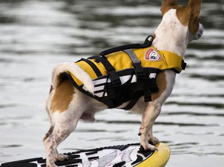 coolest dog gadgets - doggy life vest