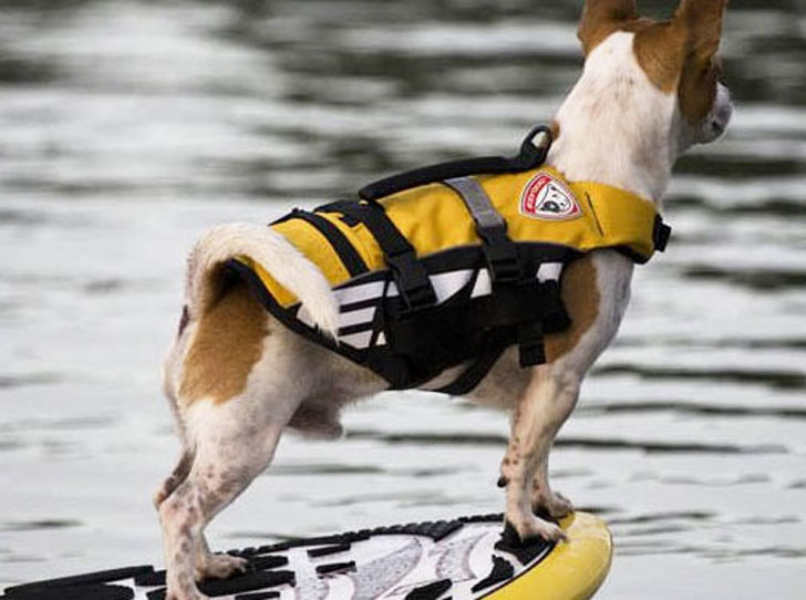 coolest dog gadgets - doggy life vest