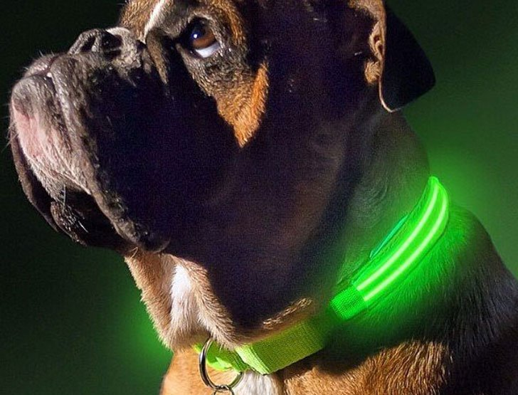 coolest dog gadgets - light up dog collars