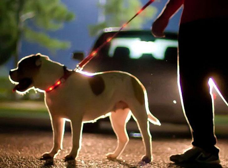 coolest-dog-gadgets---light-up-dog-leash