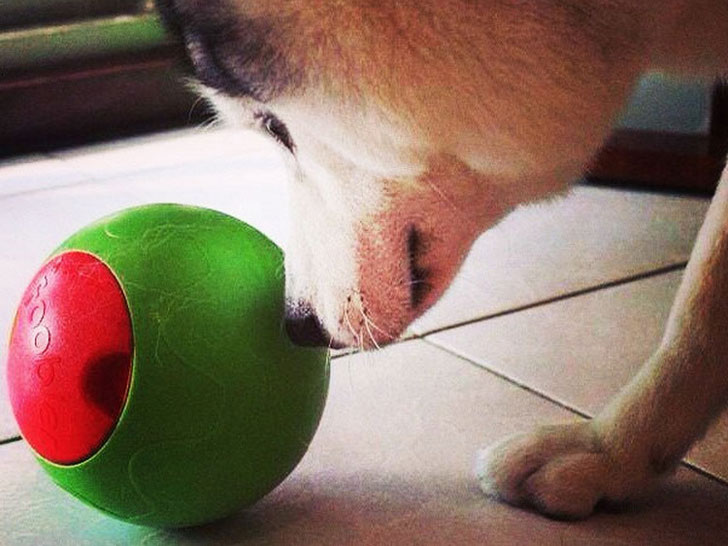 coolest dog gadgets - timed puzzle feeder