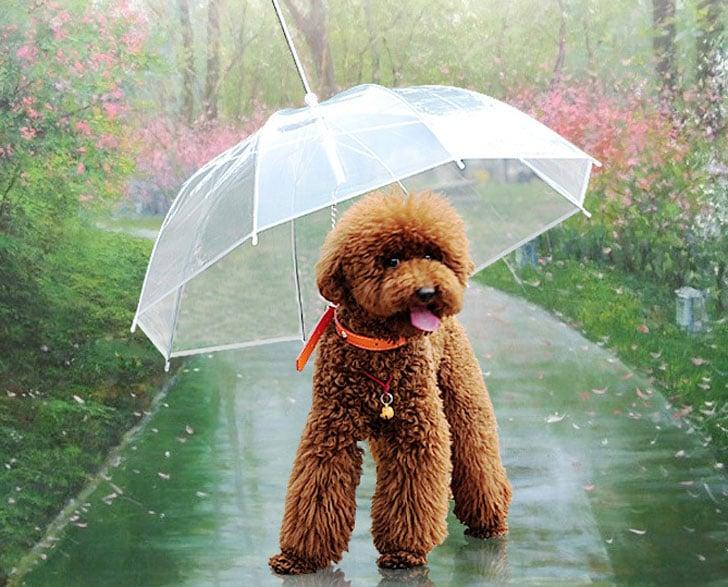 coolest dog gadgets - dog umbrella leash