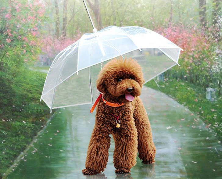 coolest dog gadgets - dog umbrella leash