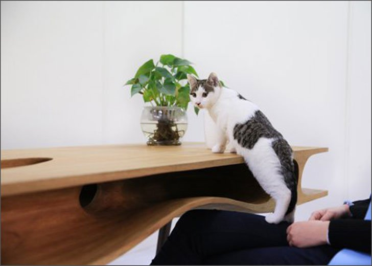 designer-cat-table-desk-