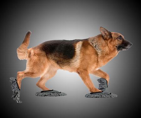doggie-floor-dusting-slippers
