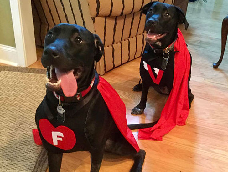 Custom Dog Costumes