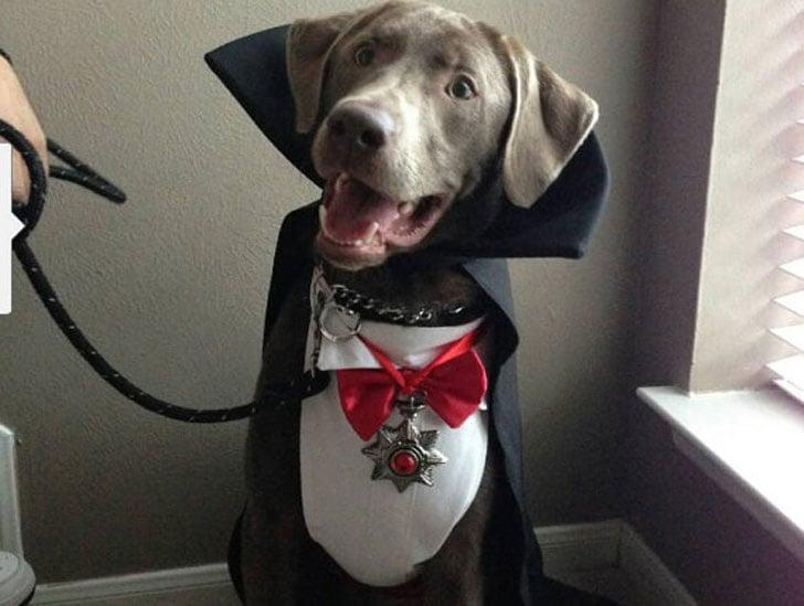 Dracula/Vampire Dog Costume