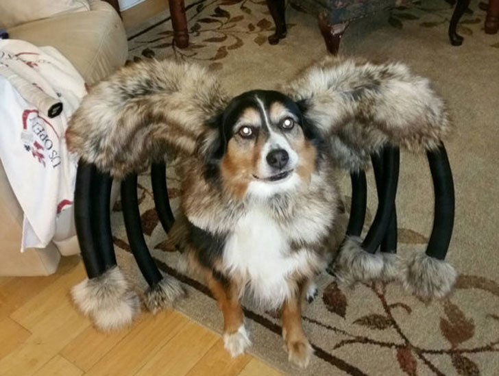 Giant Mutant Spider Dog Costume