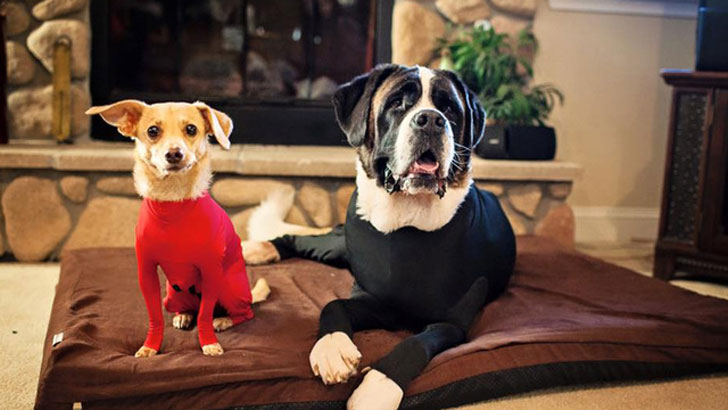 Leotards For Dogs