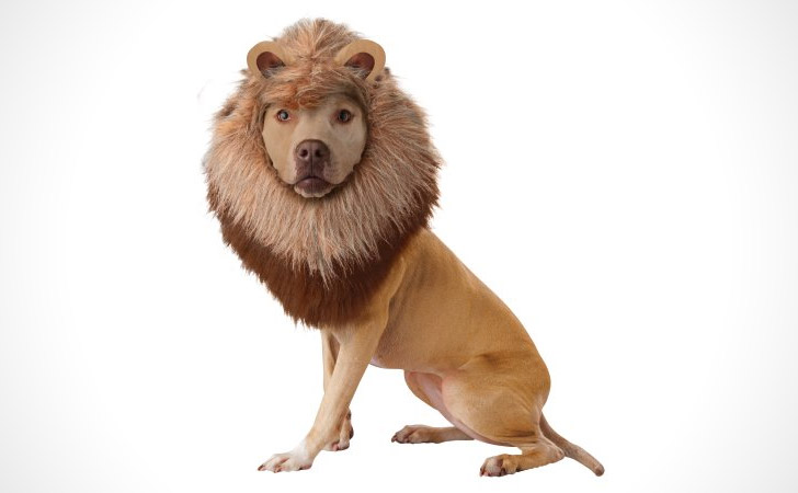 Lion Dog Costume - Pet Costumes For Dogs