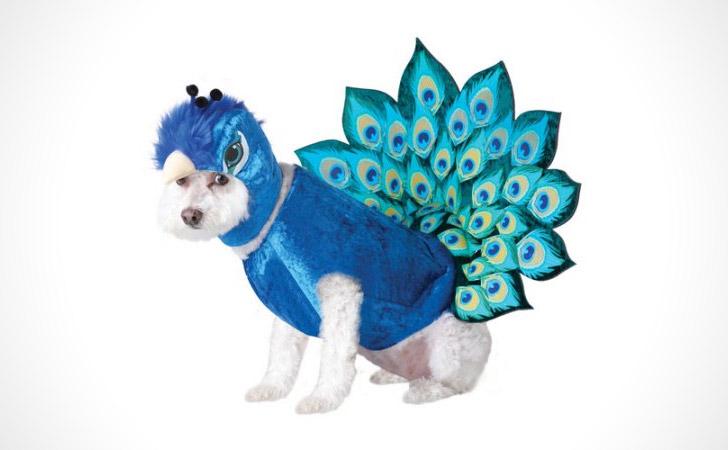 Peacock Dog Costume