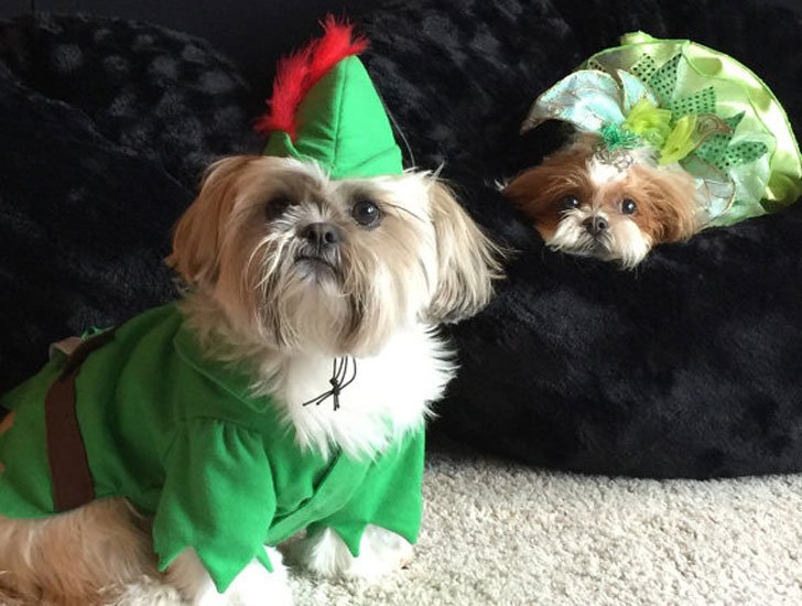 Peter Pan Dog Costume
