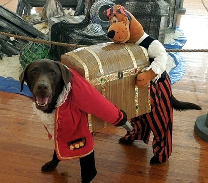 55 cool pet costumes for dogs of all sizes dog costume ideas. Black Bedroom Furniture Sets. Home Design Ideas