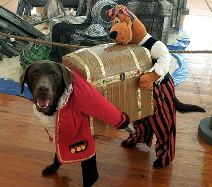 Pirate And Scooby With Treasure Chest