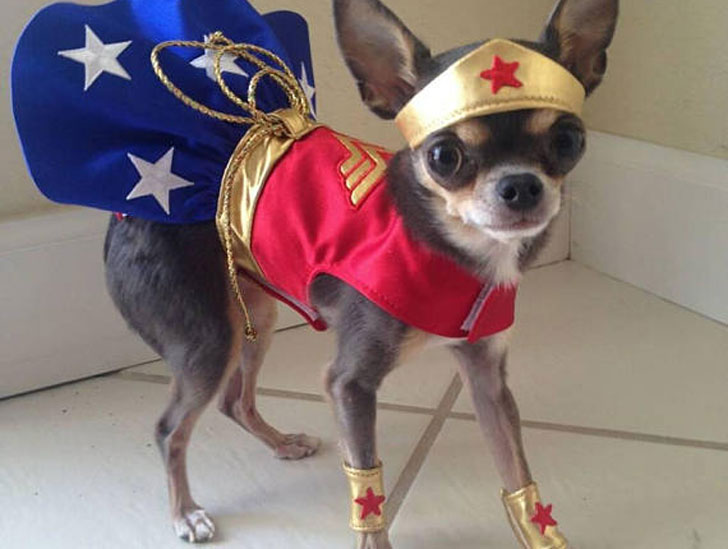 Satin Red Wonder Woman Dog Costume
