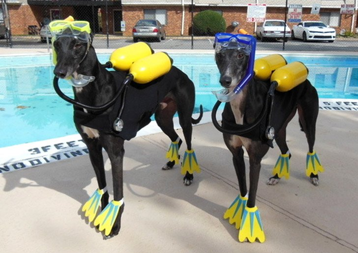 Scuba Dogs - Pet Costumes For Dogs
