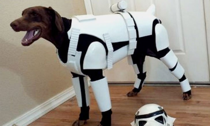 55 Cool Pet Costumes For Dogs Of All Sizes Dog Costume Ideas