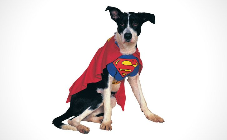Superman Dog Costume - Pet Costumes For Dogs