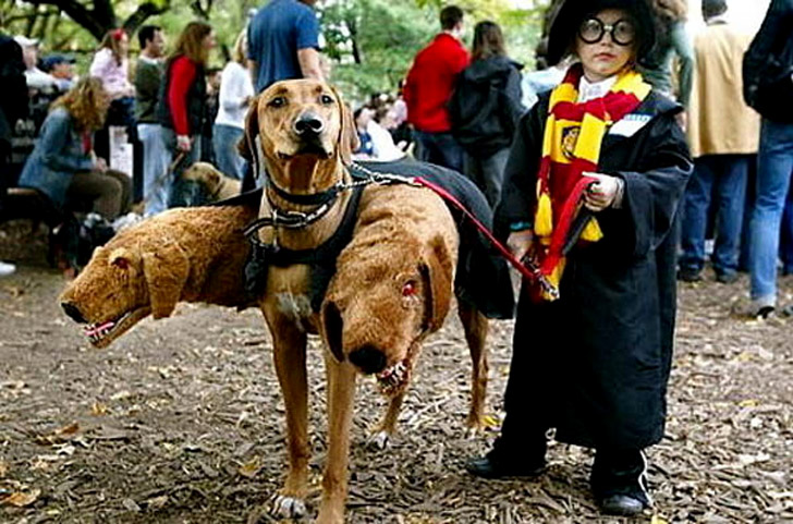 Three Headed Harry Potter Dog Costume - Pet Costumes For Dogs