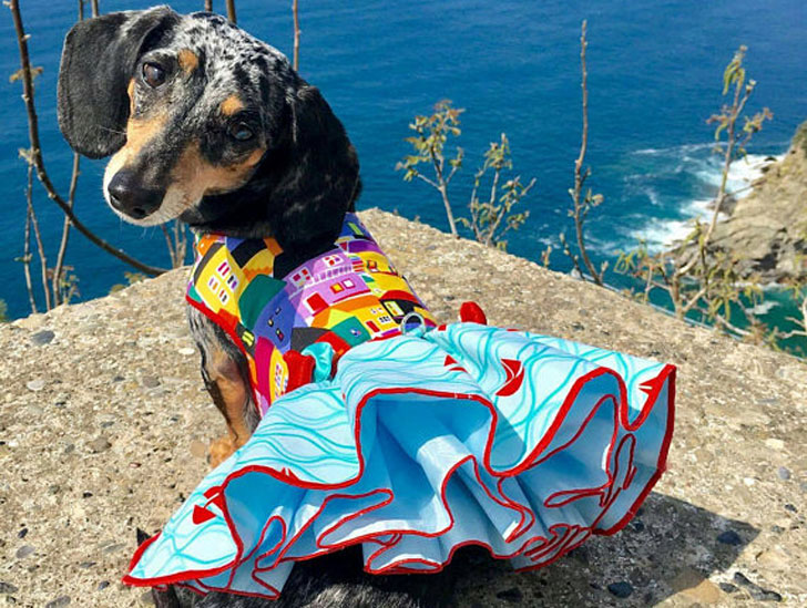 Tuscany Sailing Dog Dress