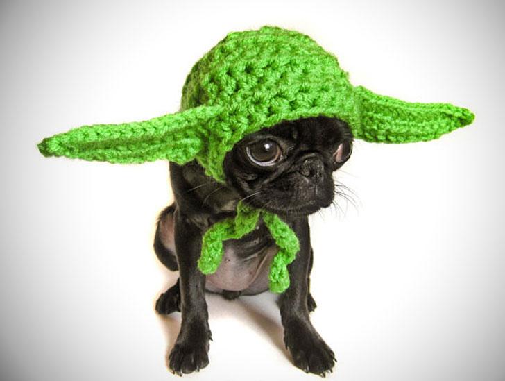 Yoda Ears Dog Costume